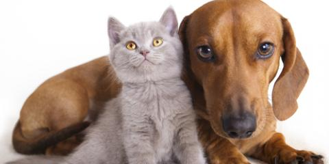3 Animal Care Questions to Ask Yourself Before Getting a Pet, Montgomery, Ohio