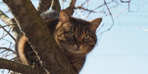 Why Cats Like High Places, Columbia, Missouri