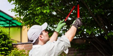 Guide to the Best Times of Year to Trim Your Trees, Washington, Missouri