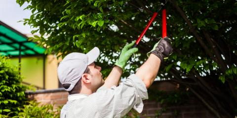 3 Reasons to Hire a Professional for Tree Trimming, ,