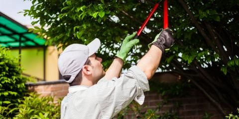 Tree Trimming Mistakes to Avoid, ,