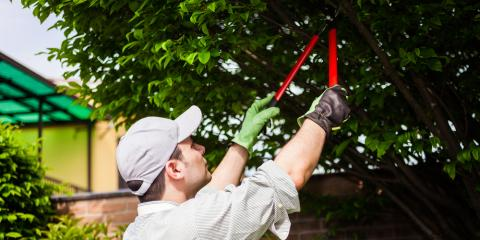 Need Lawn Maintenance? What You Should Know About Tree Trimming, Anchorage, Alaska