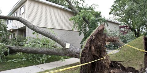 How to Prevent Tree Storm Damage, Owings Mills, Maryland