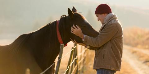 3 Signs Your Horse Might Be Ill, Oceanside-Escondido, California