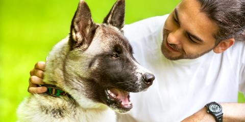 All You Need to Know About Overheating in Pets, Round Lake, Wisconsin