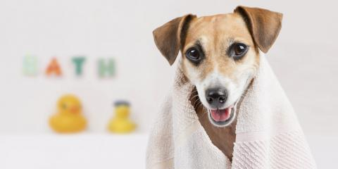 5 Ways to Make At-Home Pet Grooming a Spa-Like Experience, Avon, Ohio