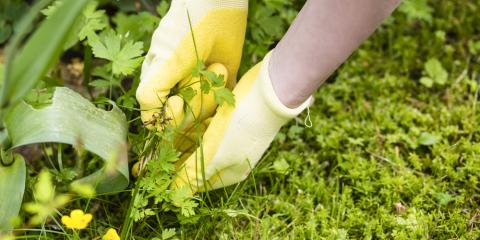 5 Landscaping Tips for Eliminating Weeds , Long Valley, New Jersey