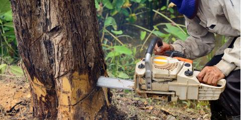 3 Dangers of DIY Tree Removal, Anchorage, Alaska