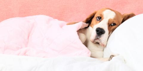A Veterinarian Lists 3 Common Winter Illnesses for Pets, Clarksville, Maryland