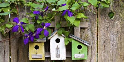 4 Tips for Building a Birdhouse, Ludlow, Kentucky