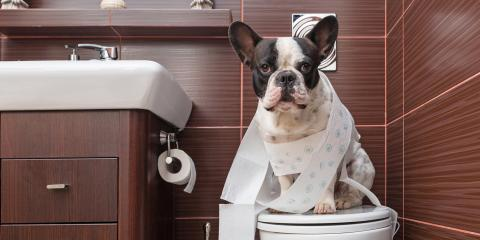 Ask a Plumber: What's the Verdict on Pets & Toilet Water?, Lakeville, Minnesota