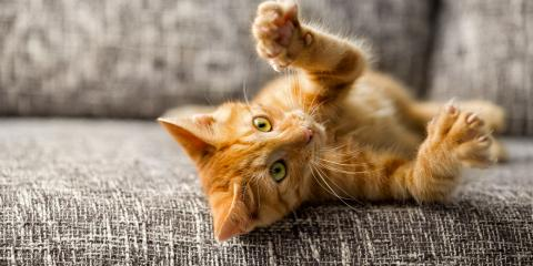 4 Common Injuries Affecting Cats, Miami, Ohio