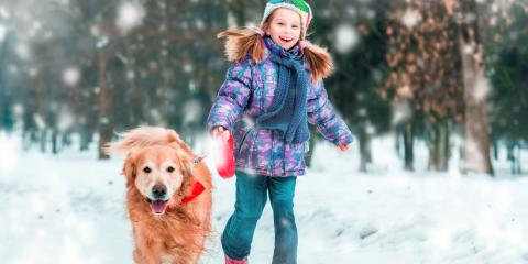 3 Veterinarian-Approved Tips for Keeping Your Pets Safe This Winter, Sycamore, Ohio