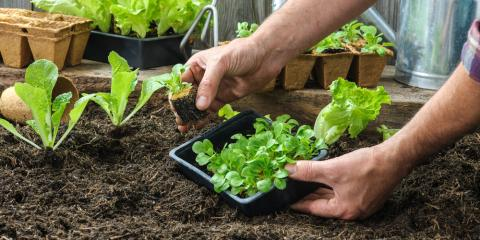 A Beginner's Guide to Gardening, Lexington-Fayette, Kentucky
