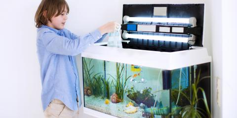The Right Way to Pack and Move a Fish Tank, Rochester, New York