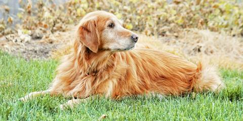 How Do Wireless Dog Fences Work?, Elizabethtown, Kentucky