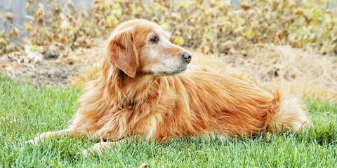 A Guide to Lyme Disease in Pets, Batavia, Ohio