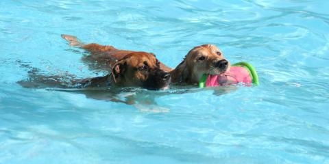 Can My Dog Swim In a Saltwater Pool? , Robertsdale, Alabama