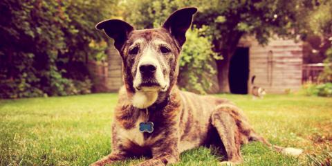 Do's & Don'ts of Feeding Older Dogs, Robertsdale, Alabama