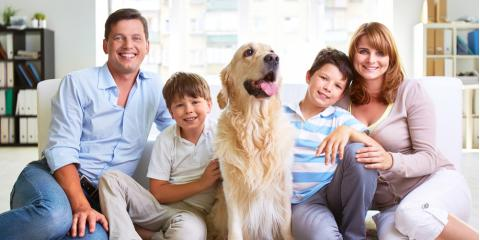 3 Ways to Make Your New Home Pet-Friendly, Vernon, Connecticut