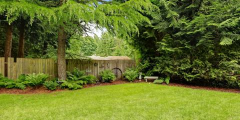 4 Signs You Need Tree Removal From Lawn Care Experts, Lexington-Fayette, Kentucky