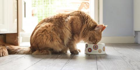3 Effective Ways to Manage Your Pet's Weight, Montgomery, Ohio