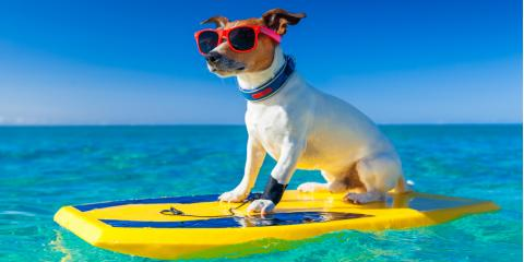 A Veterinarian Offers 3 Tips on Keeping Your Dog Safe This Summer, Batavia, Ohio