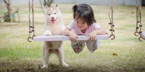 A Veterinarian's Advice on Choosing Kid-Friendly Dog Breeds, Cincinnati, Ohio