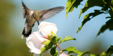 Do's and Don'ts of Attracting Hummingbirds, Bellville, Texas