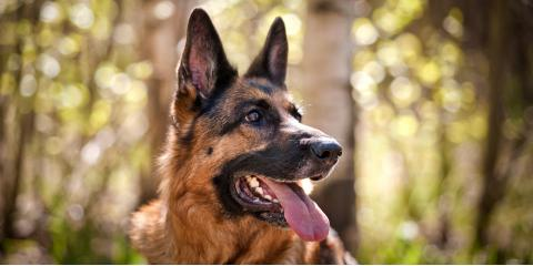 Is a Guard Dog an Effective Security System?, Rochester, New York