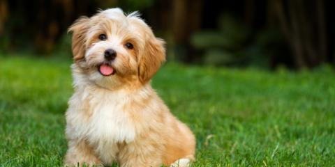 Veterinarian Recommends 3 Ways to Protect Your Pet from the Summer Heat, Penfield, New York