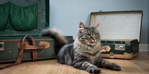 FAQs About Pet Boarding, Fairbanks North Star, Alaska