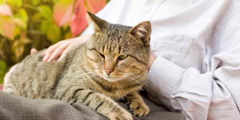 5 Senior Pet Health Tips, Lincoln, Nebraska