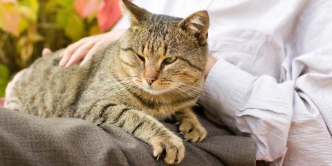 4 Tips When Caring for an Older Cat, Round Lake, Wisconsin