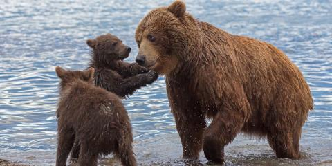 Tips for Keeping Bears Away From Your Cabin , Pagosa Springs, Colorado