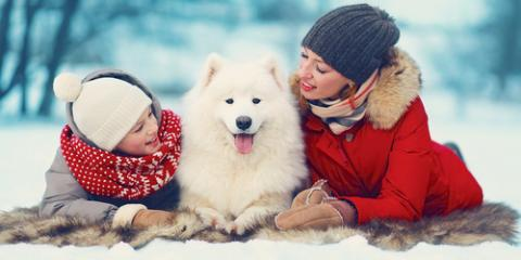 Top 3 Winter Grooming Tips for Pets, Fairfield, Ohio