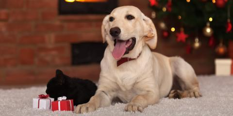 3 Dangerous Plants to Keep Away From Your Pet During the Holidays, Waynesboro, Virginia