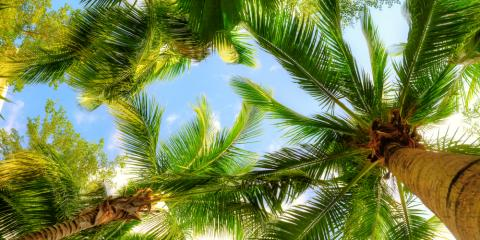 Tips for Planting Palm Trees, Kihei, Hawaii