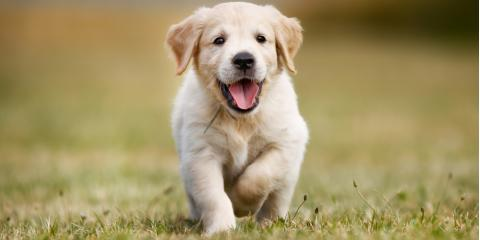 Taking Your Puppy for Dog Grooming? 3 Questions to Ask Beforehand, Lincoln, Nebraska