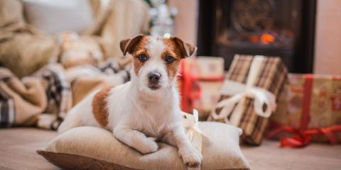 3 Holiday Plants to Avoid If You're a Pet Owner, Keaau, Hawaii