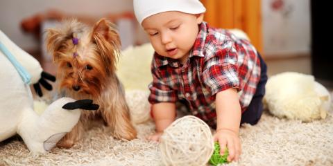 3 Carpet Pet Stain Removal Tips , Southeast Guadalupe, Texas
