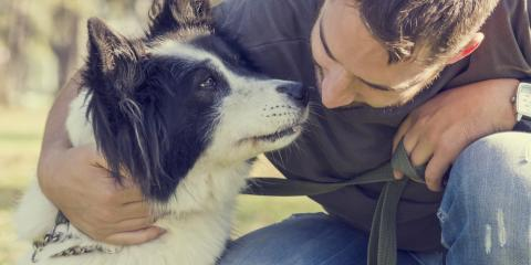 3 Common Mistakes Dog Owners Make That You Should Avoid, Churchville, New York