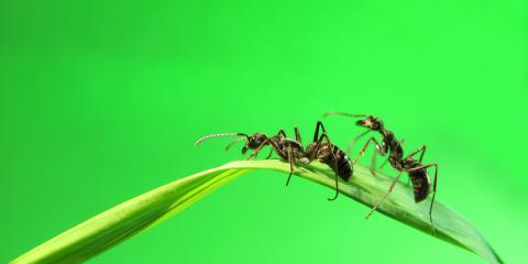 6 Interesting Facts About Ants, Lihue, Hawaii