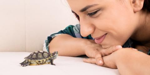 What to Know About Having a Pet Turtle, Ewa, Hawaii