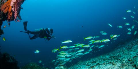 4 Reasons to Go Scuba Diving at Night in Hawaii, Honolulu, Hawaii
