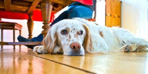 How Do Pets Affect HVAC Performance?, Omaha, Nebraska