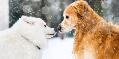 3 Essential Pet Care Tips for the Winter Months, Waynesboro, Virginia