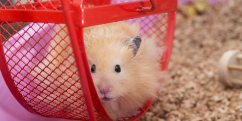 3 Reasons Why Hamsters Make Excellent First Pets for Kids, Fairport, New York