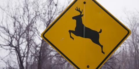 Madison Collision Repair Center Explains What to Do After Hitting a Deer With Your Vehicle, Madison, Ohio