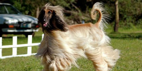 Grooming Tips for Long Haired Dogs, Lincoln, Nebraska